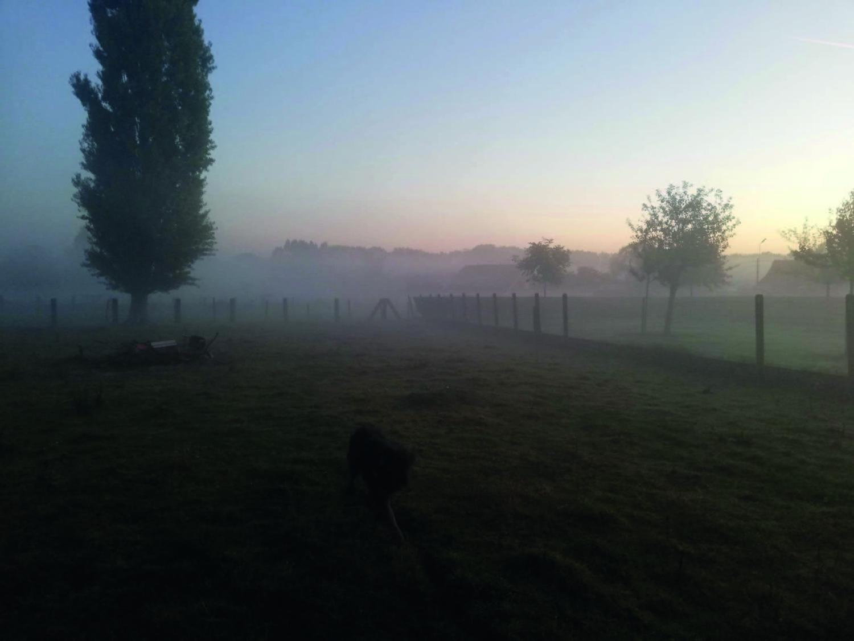 Garden by dawn